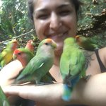 the Love bird sanctuary
