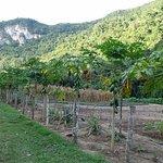 Black Rock's organic garden