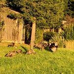 Wild Turkeys Near Reception Area