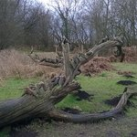general view, tree sculpture