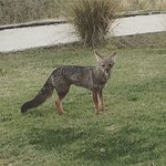 A fox passed by our villa!