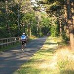 Cape Cod Rail Trail / Bike Path