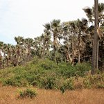 Photo of Bijilo Forest Park