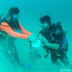 Foto de Paradise Divers Utila
