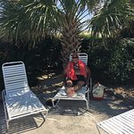 Gulf Shores Plantation Picture
