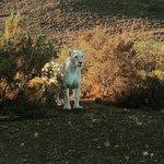 Sanbona Wildlife Reserve - Tilney Manor, Dwyka Tented Lodge, Gondwana Lodge Foto