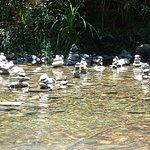 Talisman in shallow water