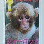 Photo de Takasakiyama Natural Zoo
