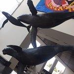 Photo de Holiday Inn Express Puerto Vallarta
