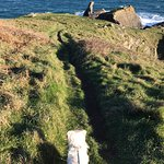 Great for dogs, but keep them on a lead! (cliffs)