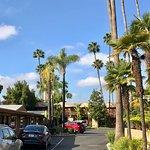 Foto de Best Western Pine Tree Motel