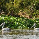 Prek Toal Bird Sanctuary Resmi