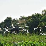 Prek Toal Bird Sanctuary-billede