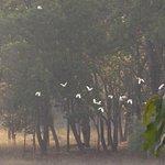Foto de Baghira Log Huts