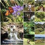 Photo of Rapaura Water Gardens