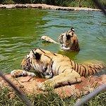 MBIDI Resort & Animal Sanctuary