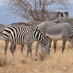 Shaba National Reserve Foto