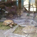 Tropicheskaya Amazonka Oceanarium and Exoterrarium