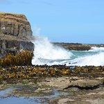 Photo de Curio Bay Natural Heritage Centre