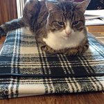 Oli - the friendly resident fur-baby!