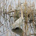 Photo de Gray Lodge Wildlife Area