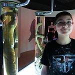 Snake Farm (Queen Saovabha Memorial Institute) Foto