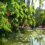 The colourful but calming Jardin Majorelle