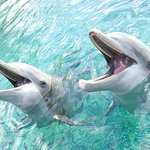 Moorea Dolphin Centre