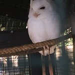 Peace River Wildlife Center Foto