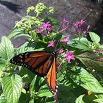 Sanibel Captiva Conservation Foundation Foto