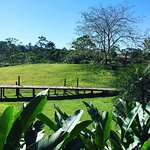 The lush land of the rainforest. La Anita Rainforest Ranch was so beautiful.
