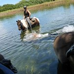 Horses & Mum in the lake!