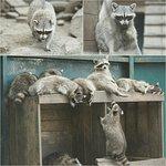 Photo of The Kiev Zoo
