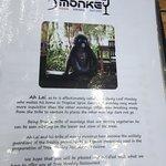 Tree Monkey Foto