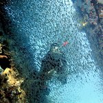 Emperor Divers Hurghada - Day Tours Foto