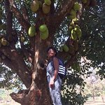 Me with a Jackfruit tree at the Bahai Temple