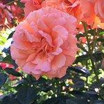Foto de International Rose Test Garden