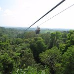 Zipping over the forest! Unforgettable views