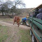 Photo de Enchanted Springs Ranch