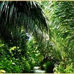 Die Insel als tropischer Garten