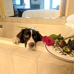 Our official Hotel Mascot, Bellwether Bella, wishing she had a date for Valentine's Day.