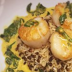 Panseared north Atlantic sea scallops in a coconut curry broth with bamboo rice