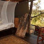 tree house inside looking out, mosquito net only
