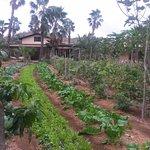 Photo of Flora's Field Kitchen