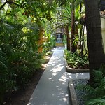 A cool and tropical oasis
