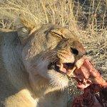 Beautiful impressions of Madikwe Game Reserve