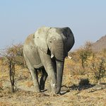 Beautiful impressions of Madikwe Game Reserve