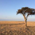 Cheetah napping under a tree