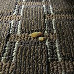 Pretzel pieces on floor