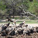 """Vulture Restuarant"" - nom nom nom"